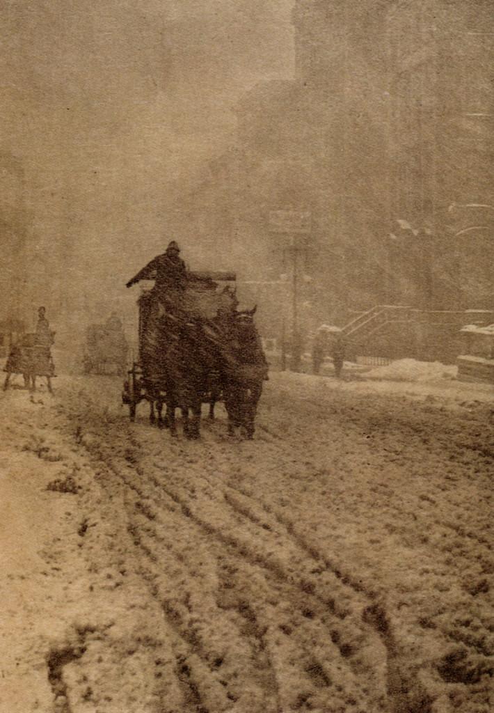 Stieglitz-Winter
